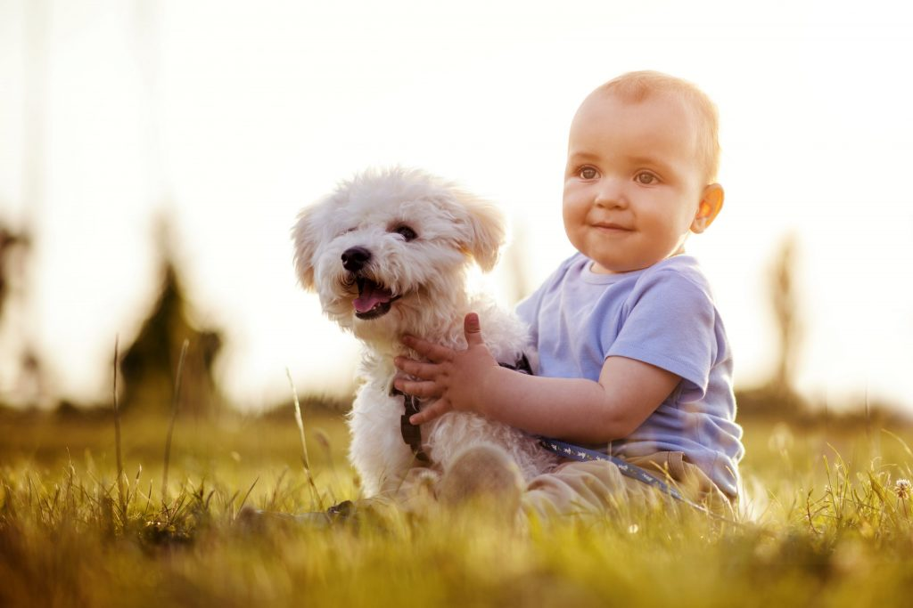 baby boy in a field with a white maltese hopeful dreams family puppies