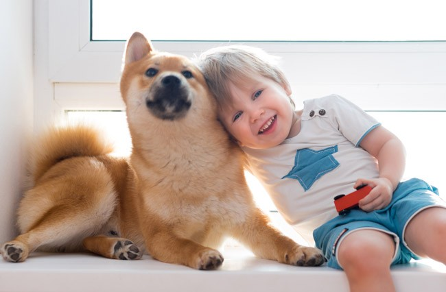 Shiba-Inu with kids in Canada