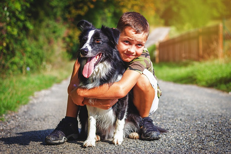 border collie with kid