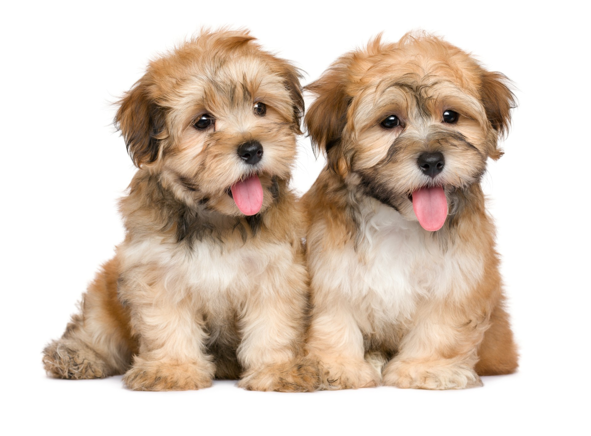 Cute puppies on puppies for sale page.